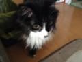 [猫] 板にゃ