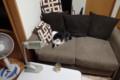 [猫] 落ち着くのにゃ