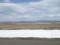 田んぼにはわらわらといる白鳥とマガンの群れ