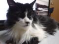 [猫] ひさしぶりの出番にゃ