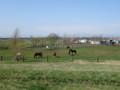 [当別] 牧場の馬たち