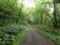 こんな林道を走る