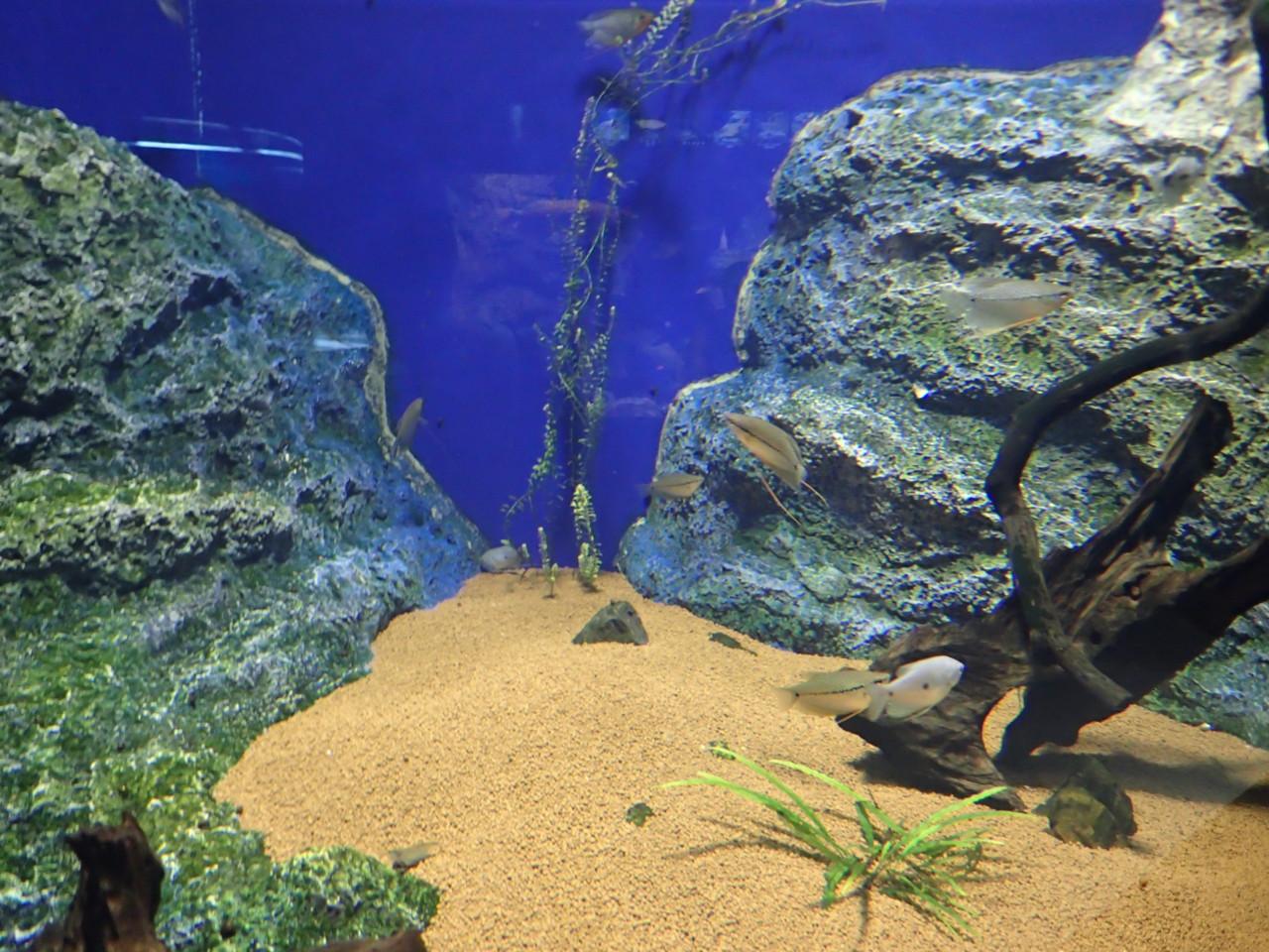 山の水族館 鑑賞魚たち