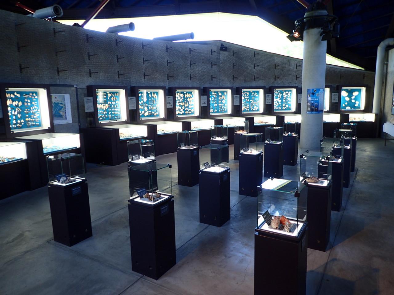 世界の貝殻展示