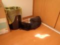 [猫]ぽとり…