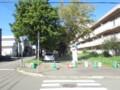[札幌]街路樹剪定中
