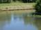 増水した発寒川を泳ぐ鴨