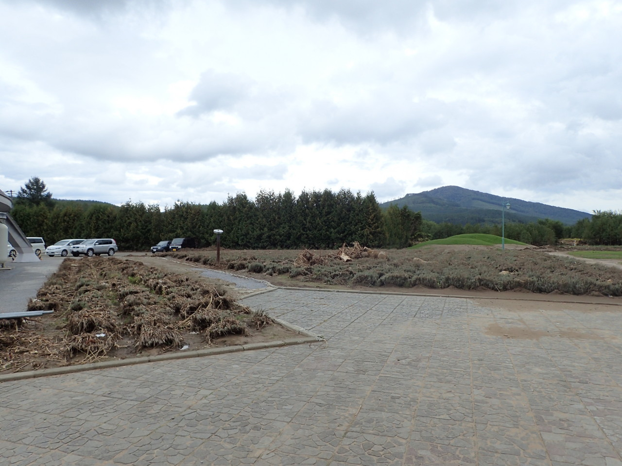 道の駅裏のラベンダー畑
