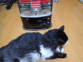 [猫]ぬくぬく