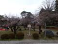 [滋賀]二季咲桜