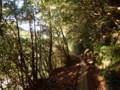 [鹿児島][屋久島][縄文杉]朝日さす