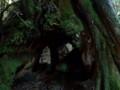 [鹿児島][屋久島][縄文杉]空洞