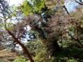 [鹿児島][屋久島][縄文杉]展望台から