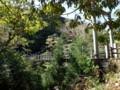[鹿児島][屋久島][白谷雲水峡]さつき吊橋