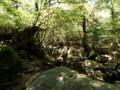[鹿児島][屋久島][白谷雲水峡]だんだん雰囲気が…