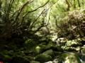 [鹿児島][屋久島][白谷雲水峡]出てくる