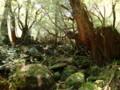[鹿児島][屋久島][白谷雲水峡]苔むす森