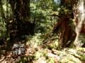 [鹿児島][屋久島][白谷雲水峡]武家杉・公家杉