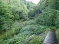 [群馬][福島][尾瀬ヶ原]しばらく森を下る