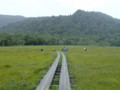 [群馬][福島][尾瀬ヶ原]牛首分岐へ合流
