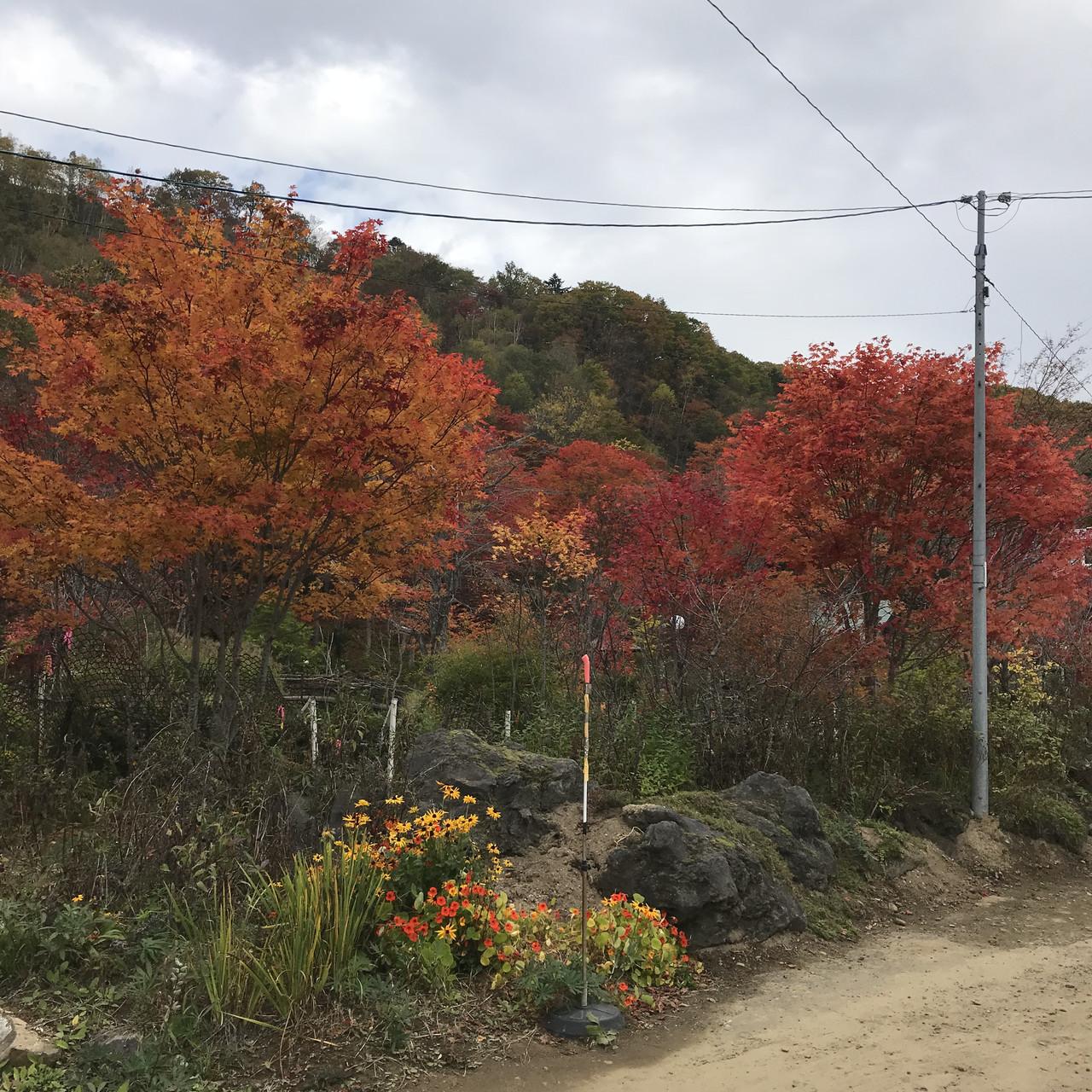 舌川原さんちの庭・1