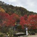[釧路]舌川原さんちの庭・2
