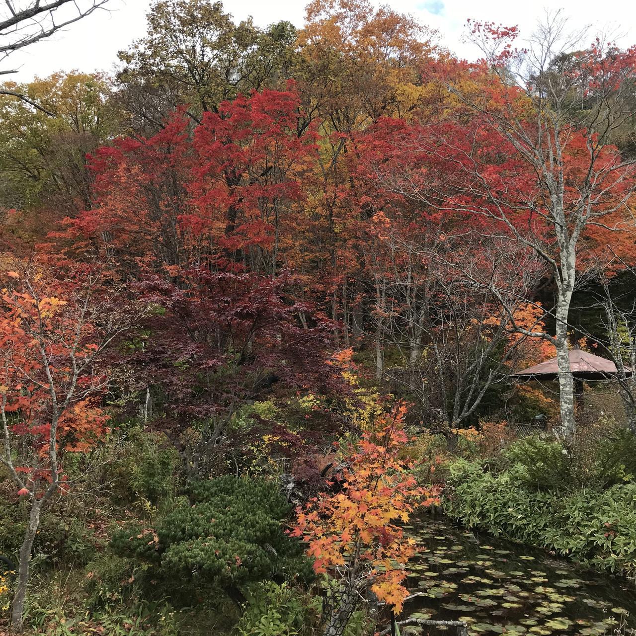 舌川原さんちの庭・3