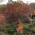 [釧路]舌川原さんちの庭・3