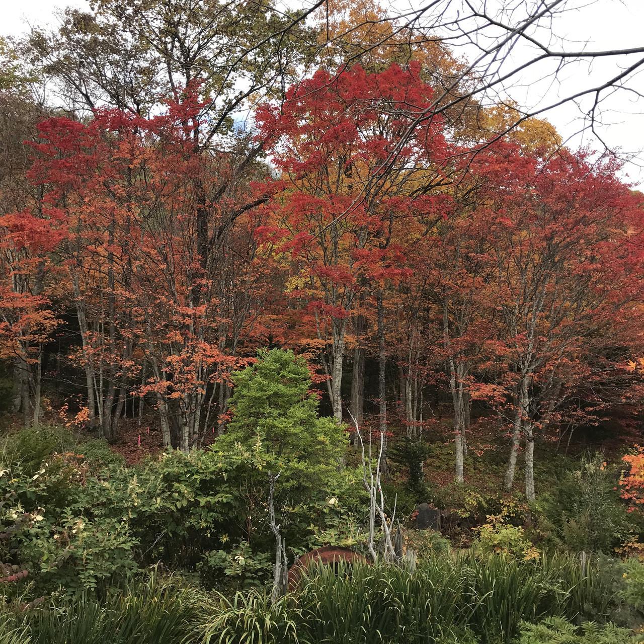舌川原さんちの庭・4