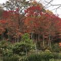 [釧路]舌川原さんちの庭・4