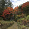 舌川原さんちの庭・5