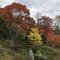 舌川原さんちの庭・7