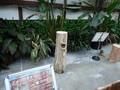 [動物]アメリカオオコノハズク