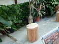 [動物]アフリカワシミミズク