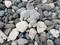 石かと思いきやサンゴ