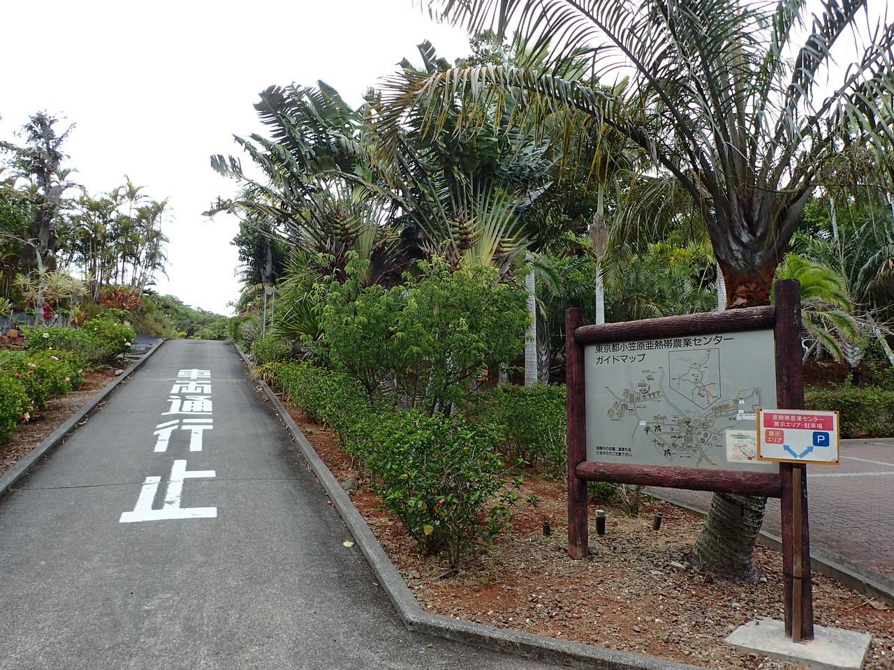 亜熱帯農業センター