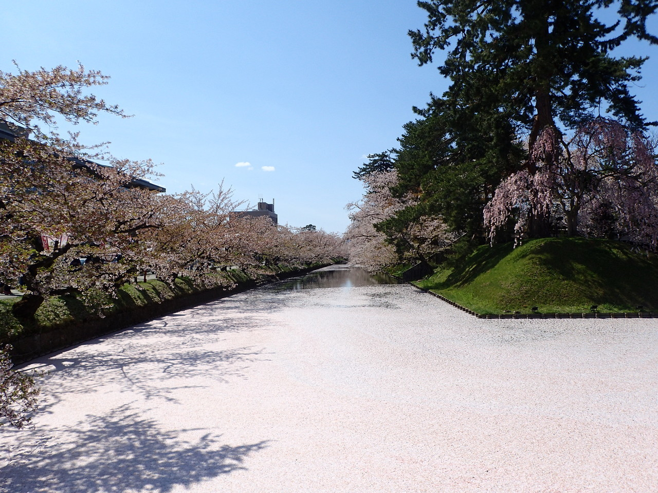 花びらで埋まった堀
