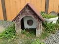 [根室][動物]猫小屋