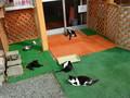 [根室][動物]猫たち