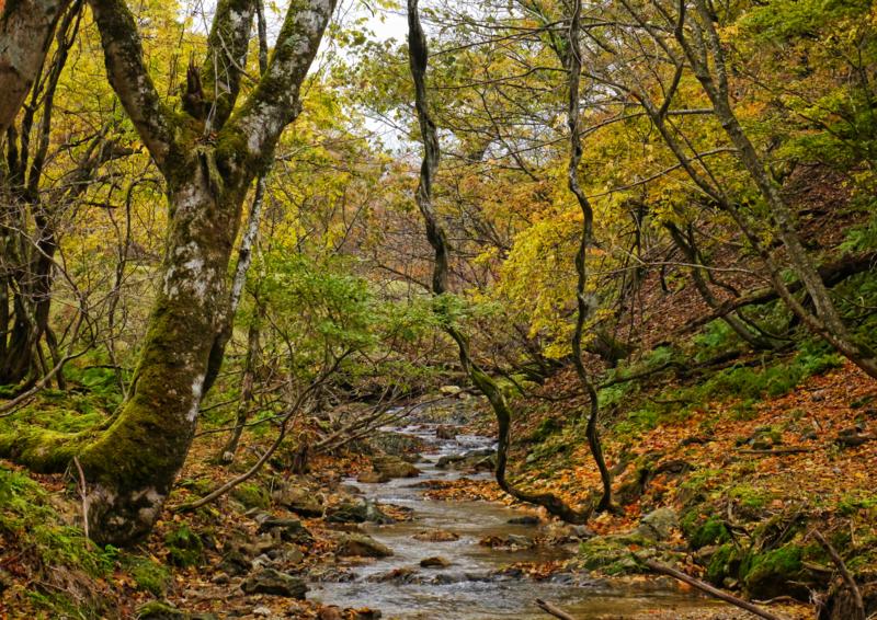 「錦秋」2回京都・木と山の写真コンテスト佳作