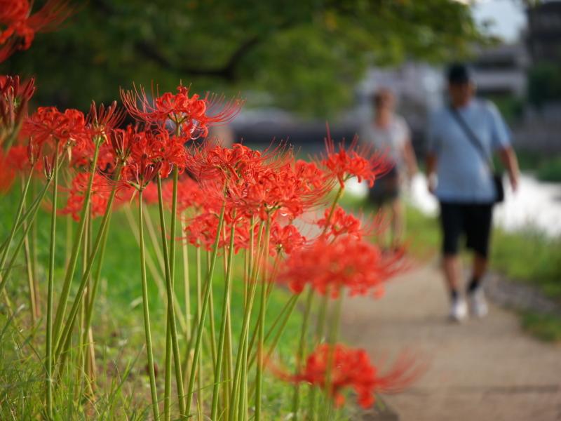 京都新聞写真コンテスト 秋の散歩道