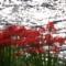 京都新聞写真コンテスト 赤い爆発