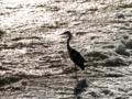 京都新聞写真コンテスト 銀砂に立つ