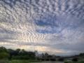 京都新聞写真コンテスト 秋の鰯雲