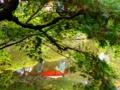 京都新聞写真コンテスト 平安神宮神苑にて