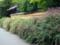 京都新聞写真コンテスト 迎称寺の萩