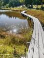 京都新聞写真コンテスト 秋の比良八雲ヶ原