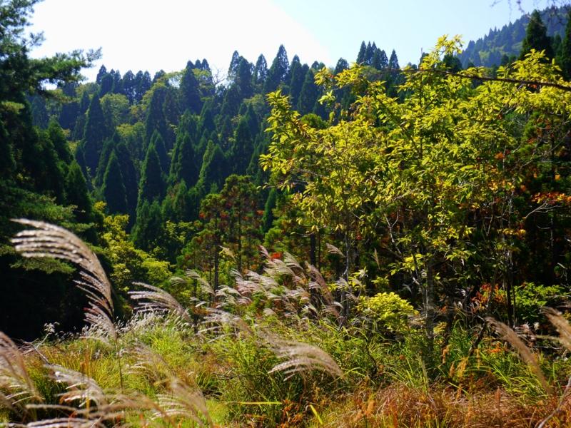京都新聞写真コンテスト 比良山上の秋