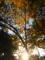 京都新聞写真コンテスト 夕日に照らされてて