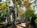 京都新聞写真コンテスト 秋のブナの森